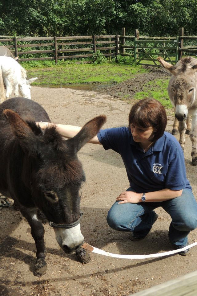 Maxine working with Donkey