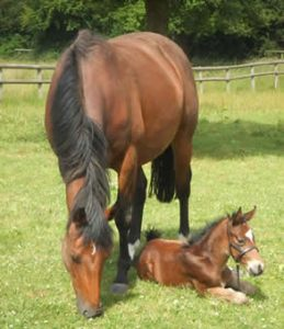 Phoenix and new born foal Hugo