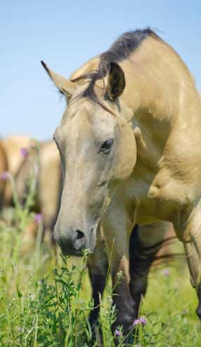 A horse naturally self-selecting
